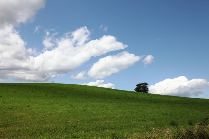 lone tree on the crest of a hill