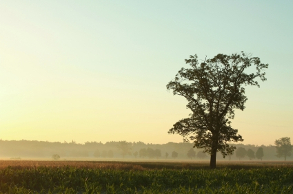 tree overlooking a misty field at sunrise